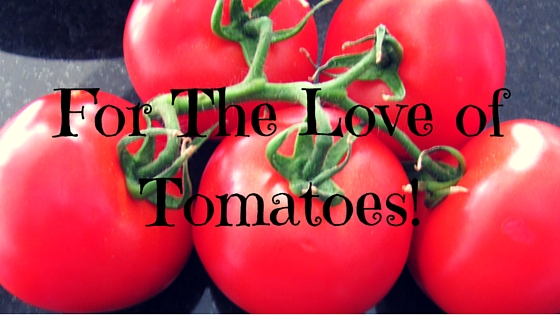 Blog_ For The Love of Tomatoes